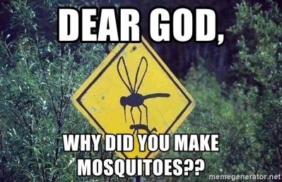 dear-god-why-did-you-make-mosquitoes