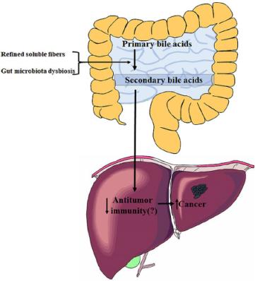 gut-liver